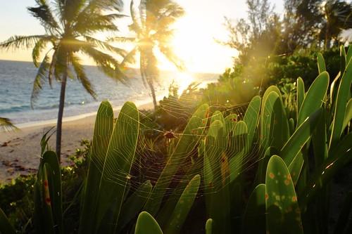 sunset beach strand sunrise palms island insel bahamas sonne sonnenaufgang eleuthera palmen spidernet