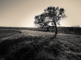 Beach_Swimmer_Trees-9   by jodyfrost