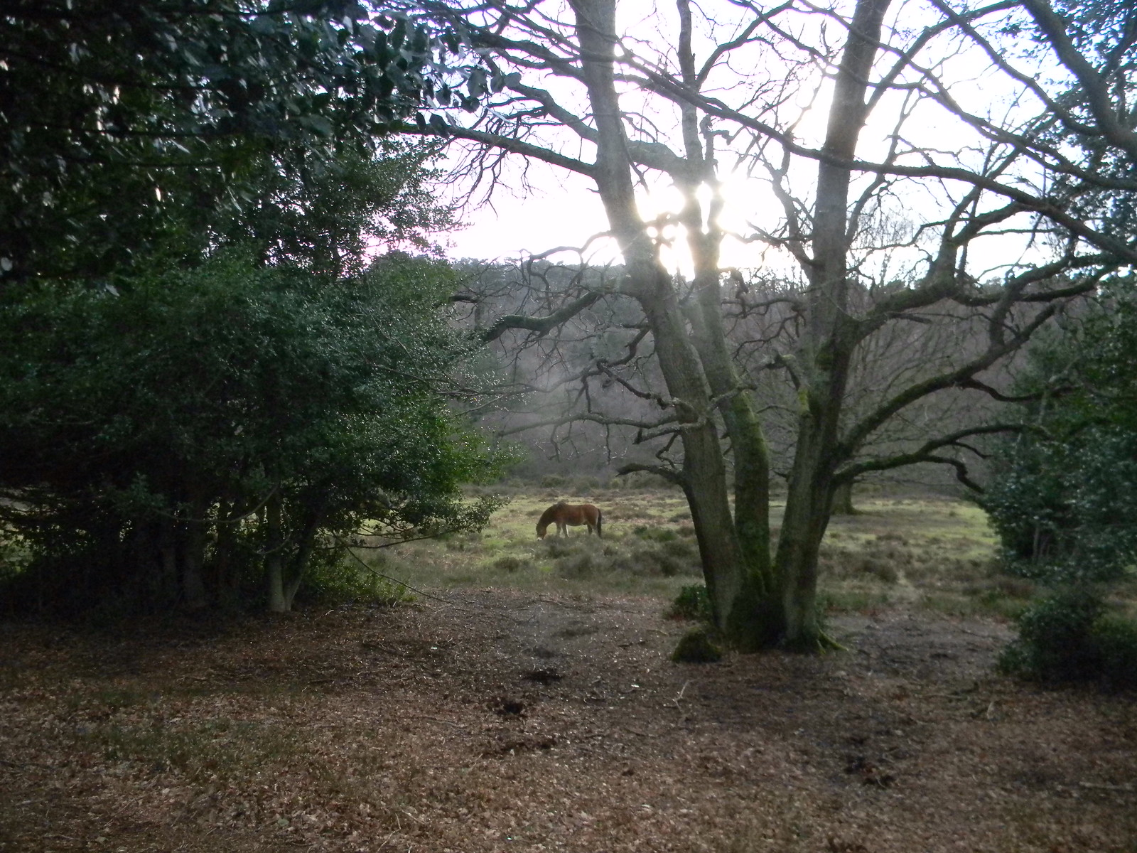 Punchbowl pony Milford to Haslemere