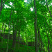 Wyalusing Hardwood Forest