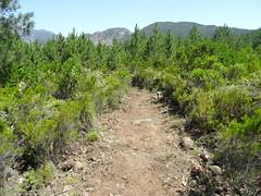 Le chemin dans la traversée entre Fugulina et la source (embranchement Conca)