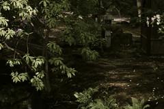 Japanse Tuin, Clingendael, Den Haag