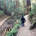 Image: Redwood Trails
