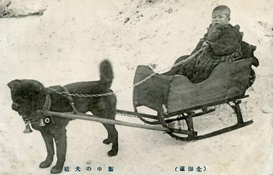 Karafuto-Ken or Sakhalin Husky 1911