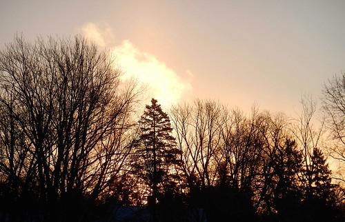 trees winter cold silhouette wisconsin sunrise nikon day cloudy coolpix belowzero wausau s800c