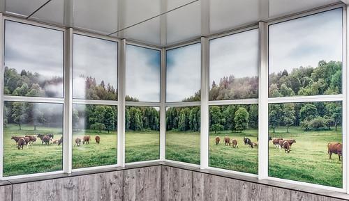 windows wall landscape cows waitingroom fotoprint blindwindows metroplatform hww windowswednesday spijkenissemetro