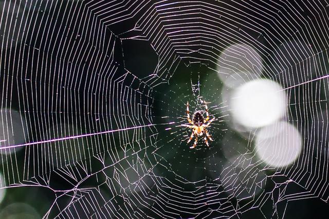 spider_backyard_330-2_8-24-13_resized