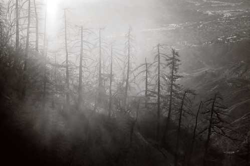 november autumn bw white foothills mist black nature landscape outdoors haze moody hiking eerie socal southerncalifornia snag sangabrielmountains sunsetridge losangelescounty echomountain canonef24105mmf4lisusm 5dm2 5dmii