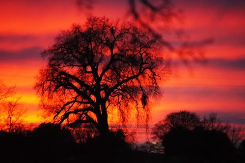 california sunset cloud tree northerncalifornia foliage ranchoroberts eldoradocounty
