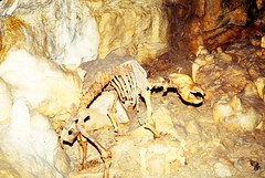 West Germany   -   Sonnenbühl-Erpfingen   -   Bärenhöhle   -   28 September 1986
