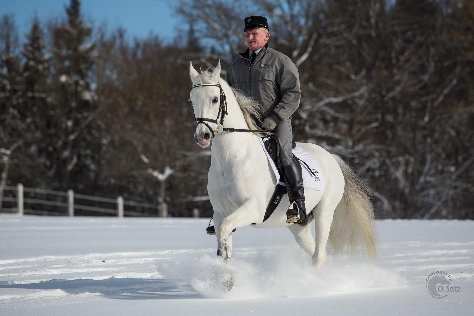 アラブ種 - Horse Scanner