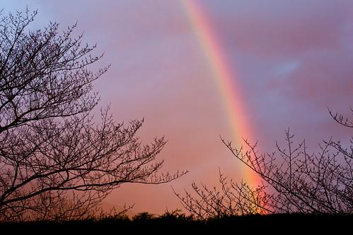 trees sky sunrise rainbow foliage tasmania hobart