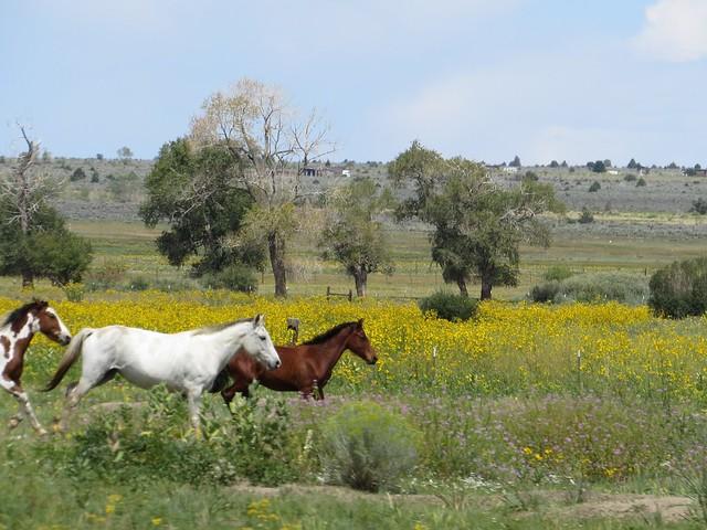 Horses at the Pueblo
