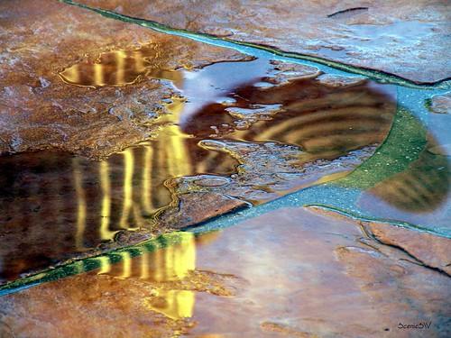 Saguaro Puddle Reflections
