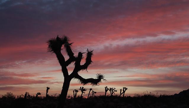 Sunrise in Mojave Desert
