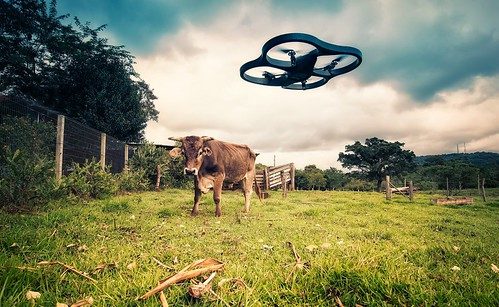 Drone vs Cow | by Lima Pix