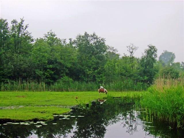 Oud Zuilen 20070609   40 km (28)