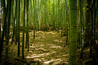 Bamboo forest @ Sagano, Kyoto | by Iñaki Pérez de Albéniz