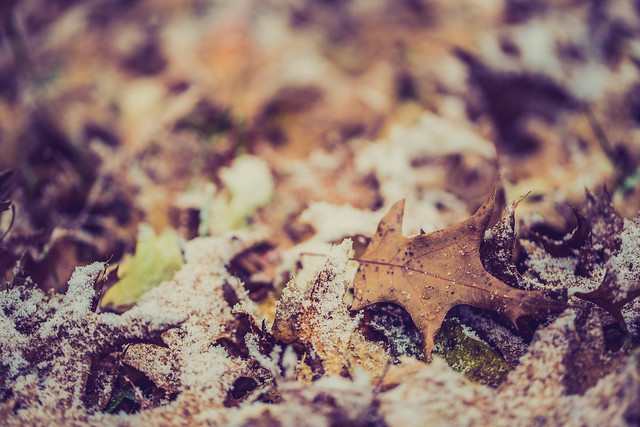 Autumn versus Winter