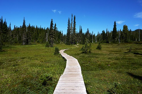Paradise Meadows, Strathcona Provincial Park, Central Vancouver Island, British Columbia, Canada