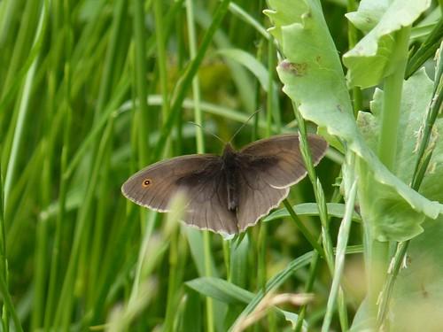 Natuurschoon Vlinderweide