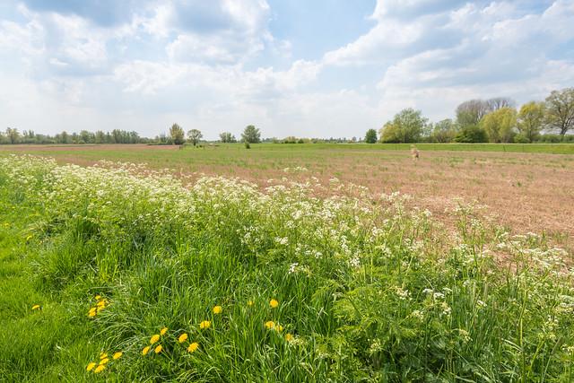Picturesque Dutch landscape in springtime