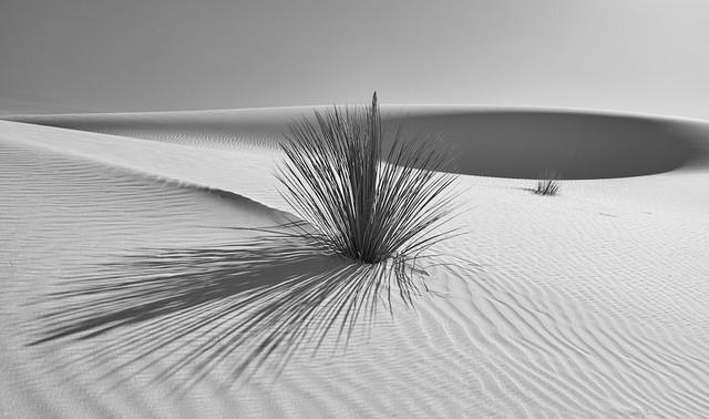 White Sands Mono