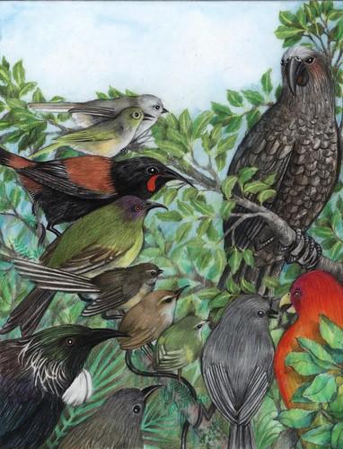 Illustration by Wendy Hodder from Te Porete.