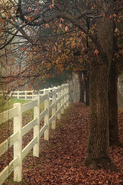 Nutbush Fence