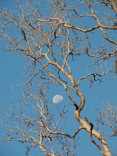 'Ohi'a trees & sky | by Anita363