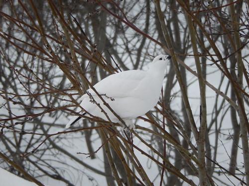 34 - Tromso - vogel