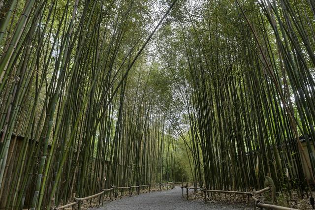 Bamboo forest, Cheekwood Botanical Garden, Nashville, Tennessee