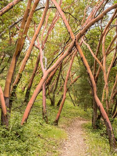 trees plants nature oregon us unitedstates bark jacksonville