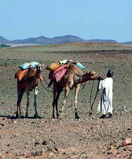 Sudan-camels-man