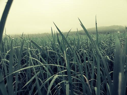 rain lumia