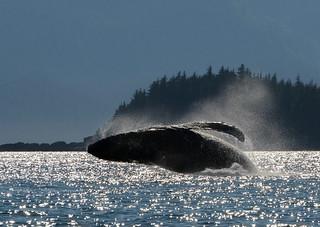 Alaska   by jkc916