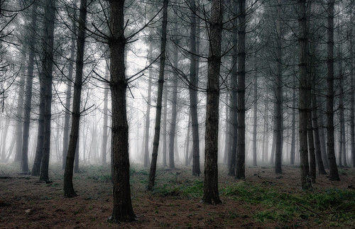 trees mist fog forest woodland landscape woods nikon mood moody warwickshire alcester d7000 jactoll