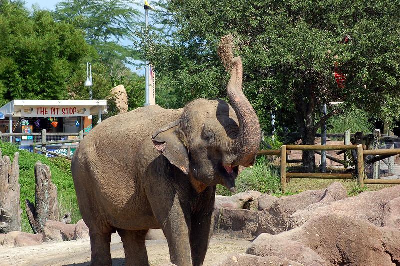 Disney elephant Animal Kingdom