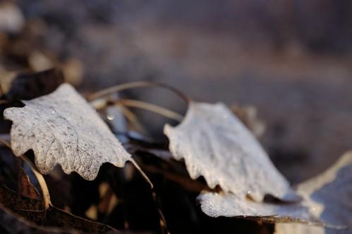 leaves frosty colorpop rioranchonm fujifilmx100s chupacabrarunner rioranchobosquetrail bosquesunrise