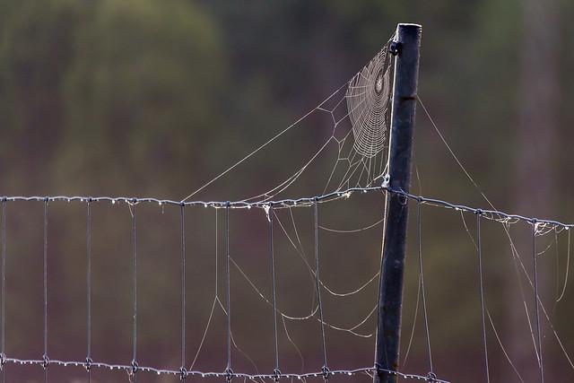 The Net is Wet - _TNY_6801