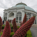 A conservatory at NYBG
