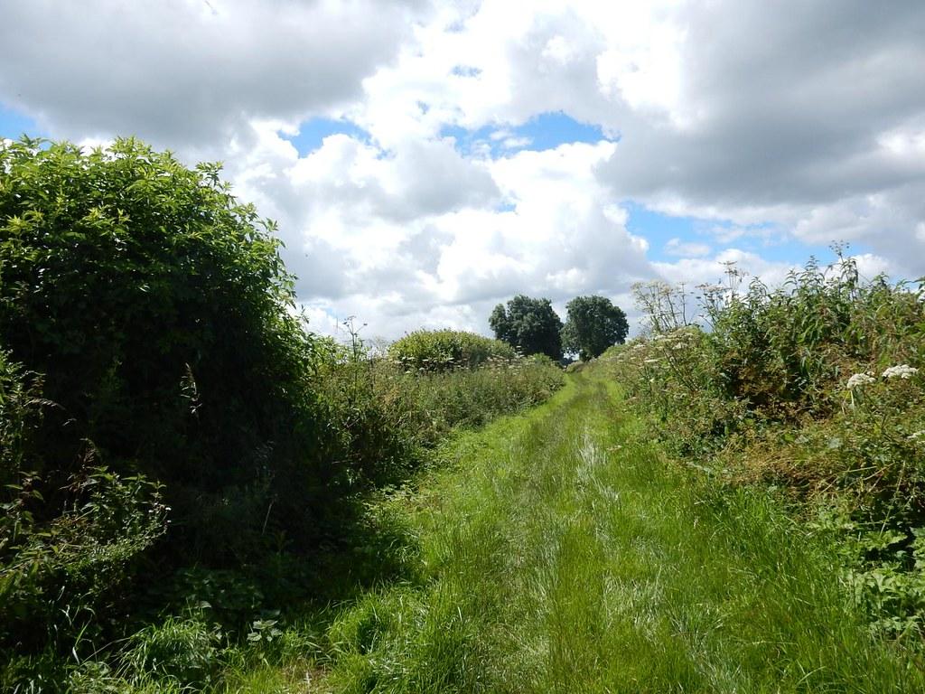 Leafy bridleway Hitchin Circular