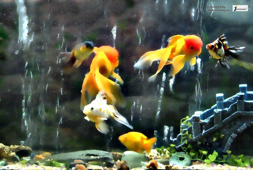Fish Tank Wallpaper Fish Tank Wallpaper Bryan Adams Flickr