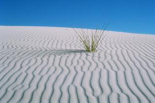 White sands national monument#Flickr12Days