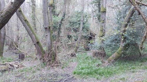 Des-res (in there somewhere) Woodland hut