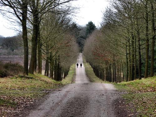 road holland netherlands landscape pad nederland naturereserve overijssel weg landschap undulating natuurmonumenten natuurgebied sallandseheuvelrug golvend platinumheartaward panasonicdmcfz150 1130645