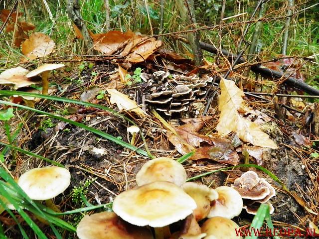 20-10-2012     Wedeblick-   Driebergen        25 Km (9)