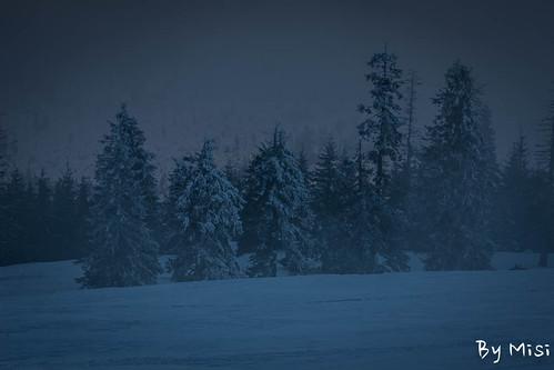 travel winter sunset tree landscape romania transilvania fa táj erdély utazás tél județulharghita hargitaaihavasok
