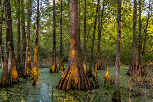 lakemartin cypressswamp dappledlight louisiana fujifilmxt1