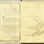 山崎斌「日本固有草木染色譜」(1933) index